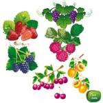 Рецепт: Тропический фруктовый салат